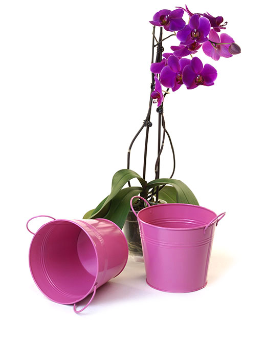 Tin Pot 6.5 inch Hot Pink - Click Image to Close