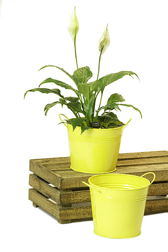 Tin Pot with Side Handles Yellow 6.5 inch