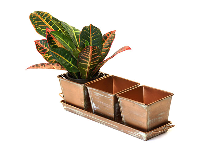 Herb Container Set - 3 Pots + Tray - Square Verdigris Copper