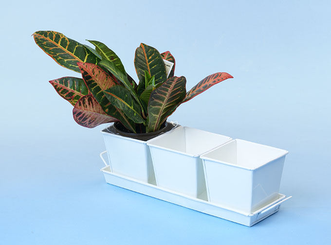 Herb Container Set - 3 Pots + Tray - Square Galvanized White