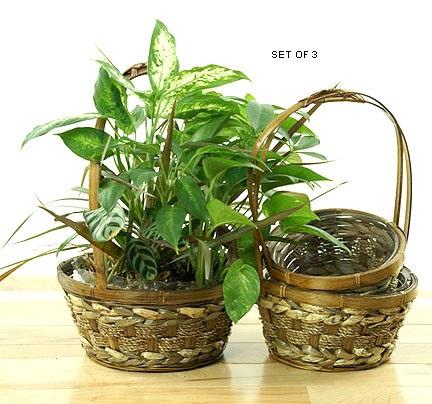Seagrass and Bamboo Shop Basket Set of 3